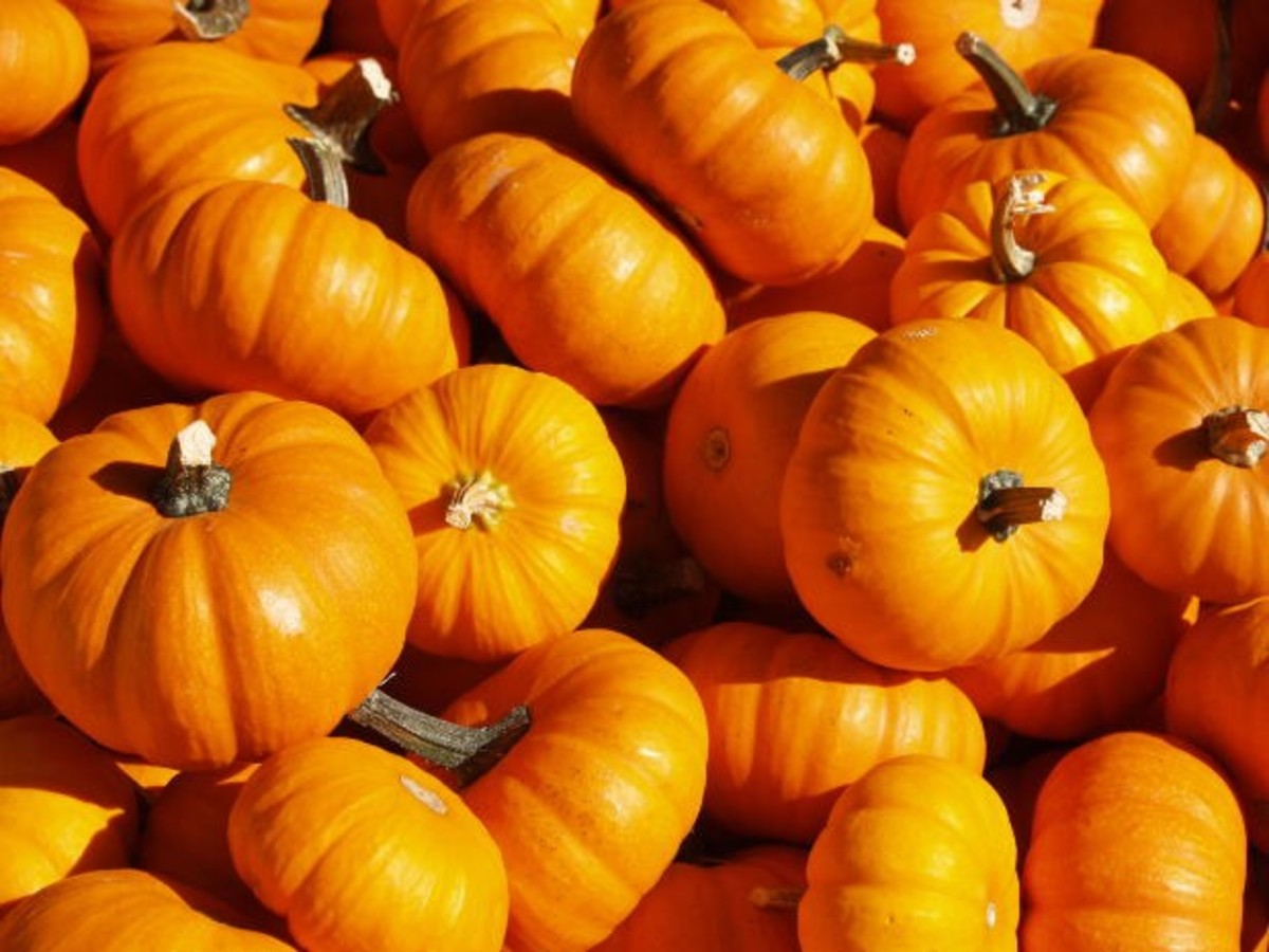 Pumpkin and other bright orange foods such as carrots and yams (sweet potatoes) are a great source of beta-carotene.
