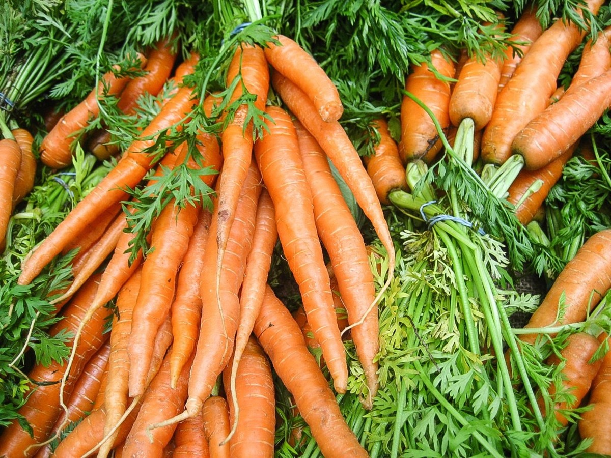 Carrots are rich in a pigment called beta-carotene. Our bodies convert this pigment to vitamin A. The vitamin is essential for producing a visual pigment named rhodopsin.