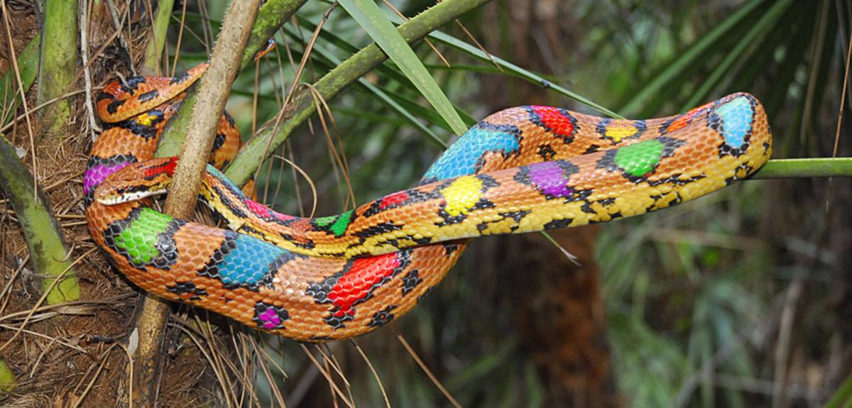 К теме не относится, но я все ищу похожую змею, какую видел, смотрите...