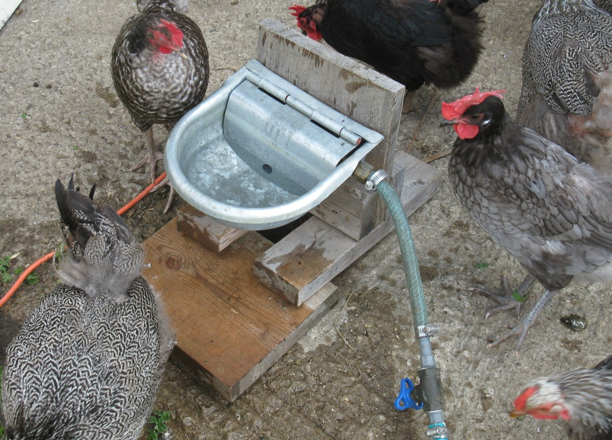 The Whole Automatic Waterer attached to a Garden Hose