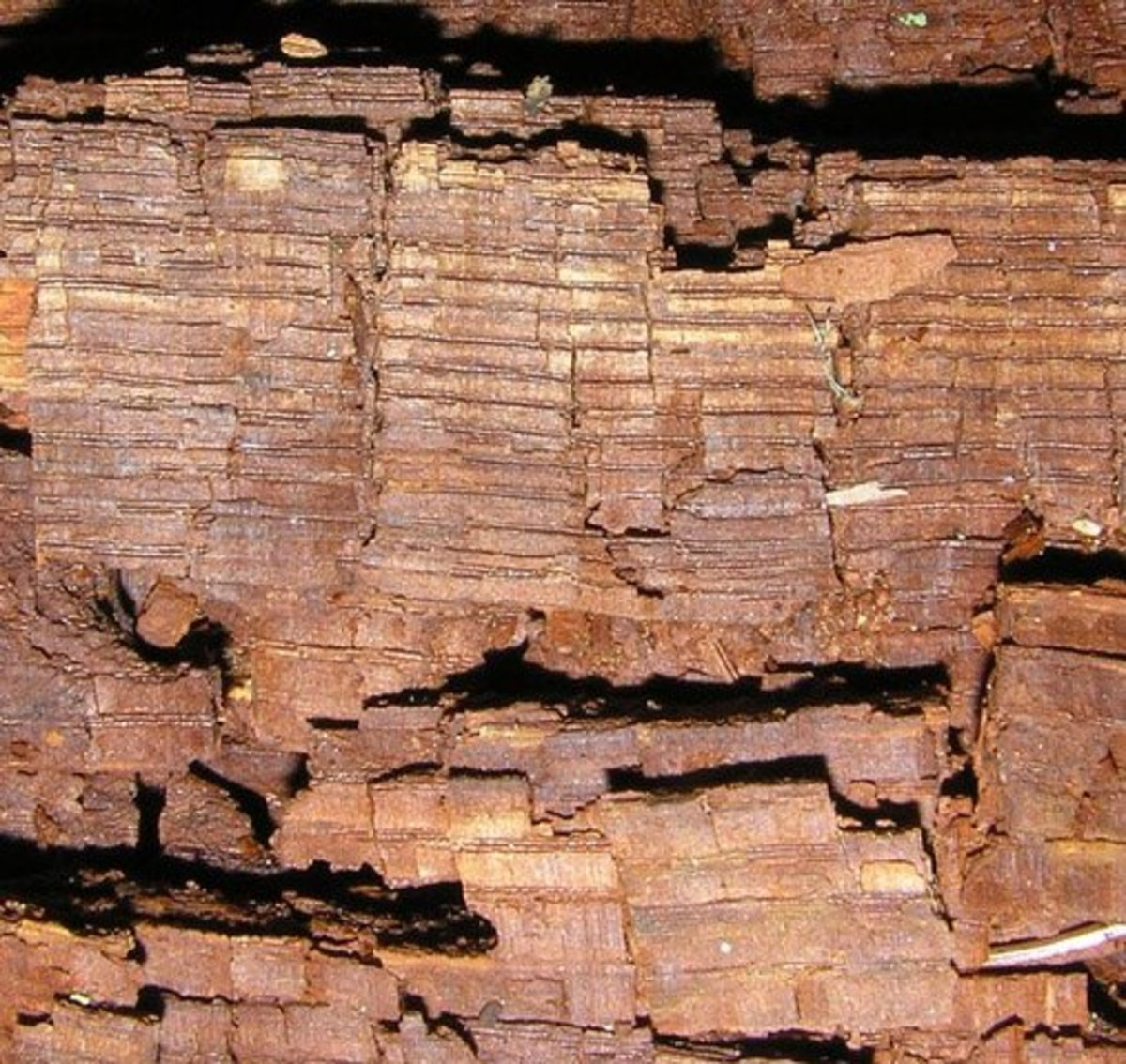 The fungus-decay on this piece of decomposing wood is referred to as brown rot.