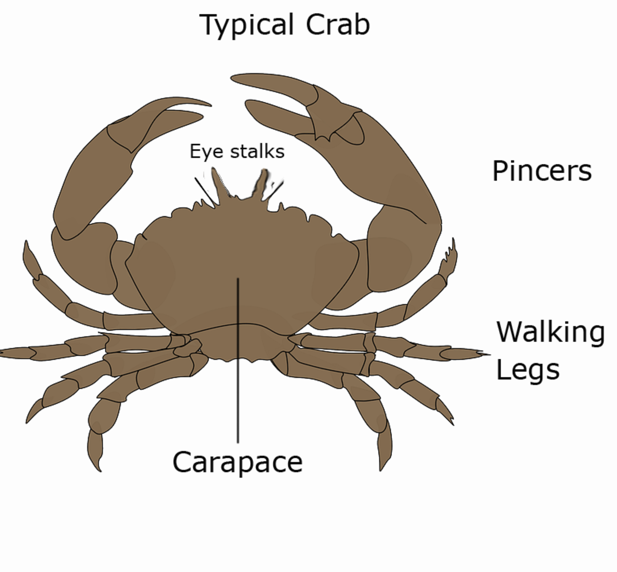 Typical Crab