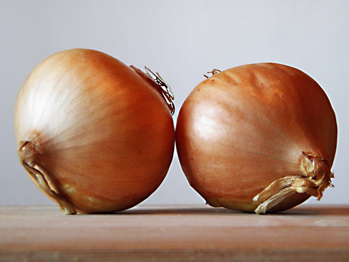 Cells from onions are very popular microscope specimens. The cells lining the layers of the onion are easy to obtain and are large.