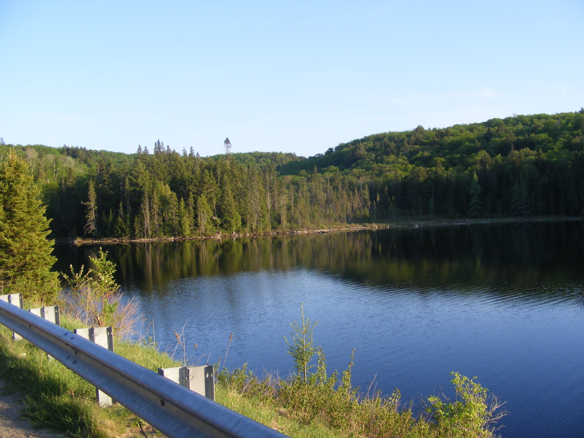 This is a view of Brewer Lake, located along the highway 60, within Algonquin Park. This is the lake directly adjacent to where I spotted my first Algonquin Park Wolf.