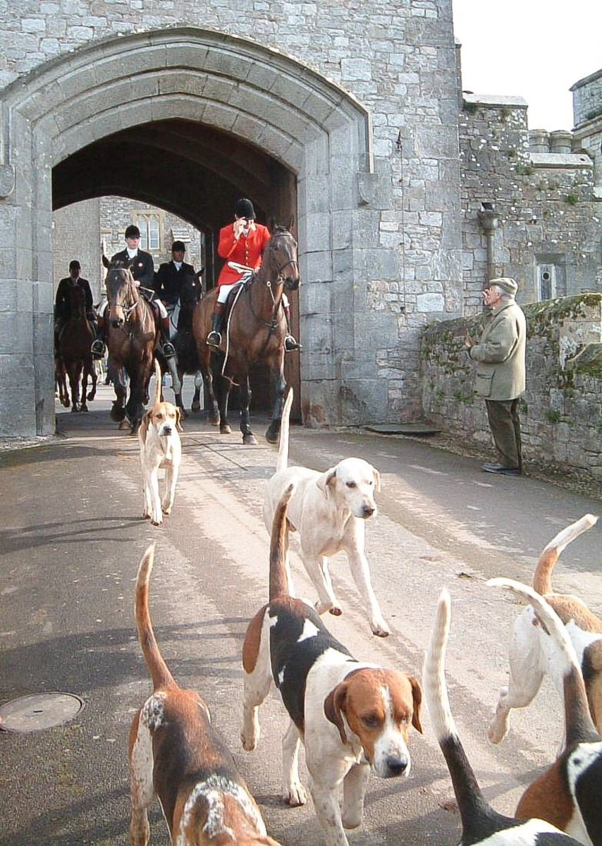 Foxhounds have an excellent sense of smell and are energetic dogs. They may have contributed to the origin of the red herring idiom.
