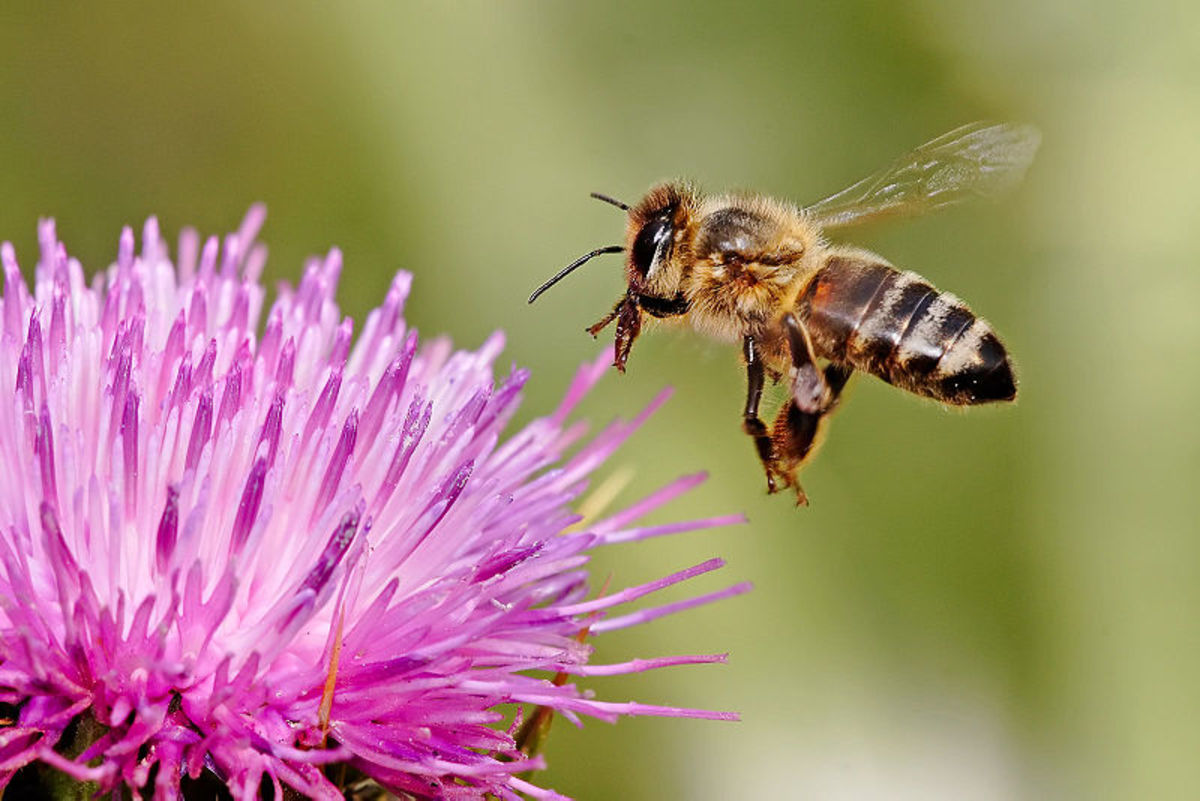 Why do bees buzz? It's onomatopoeia. They're probably saying they're happy to see ya!