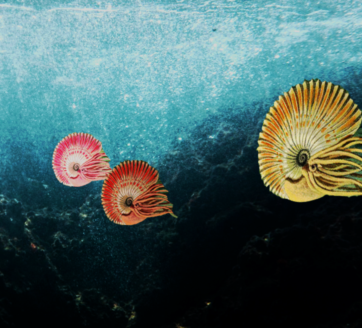 Artist's representation of a school of Ammonites