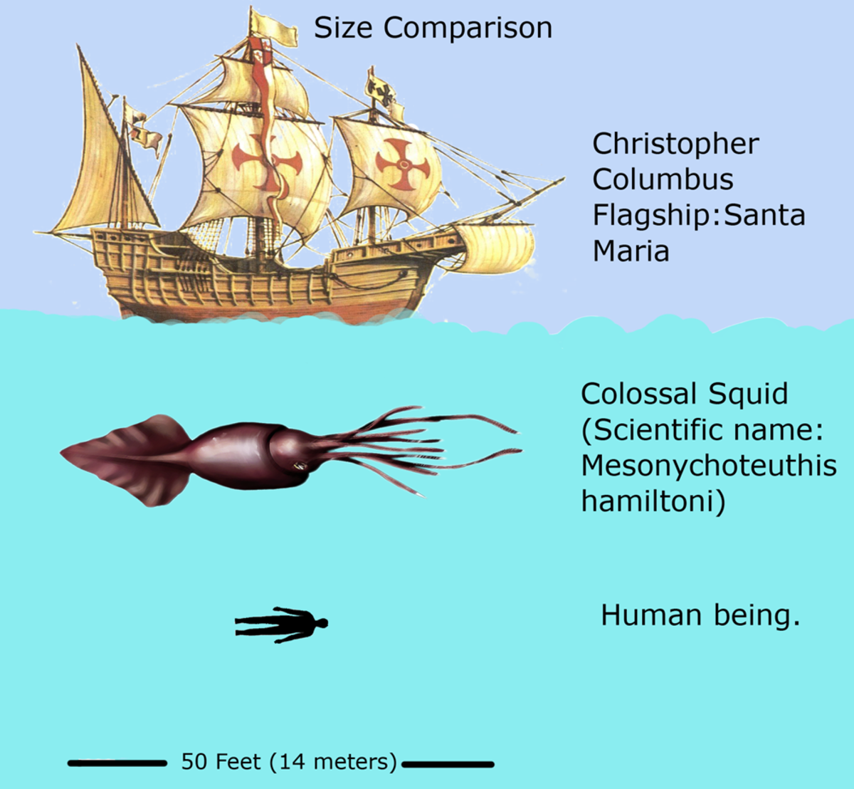 Giant Squid size comparison.