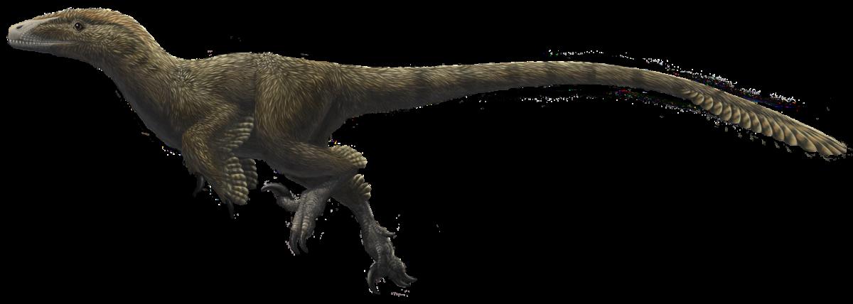 Utahraptor_ostrommaysorum