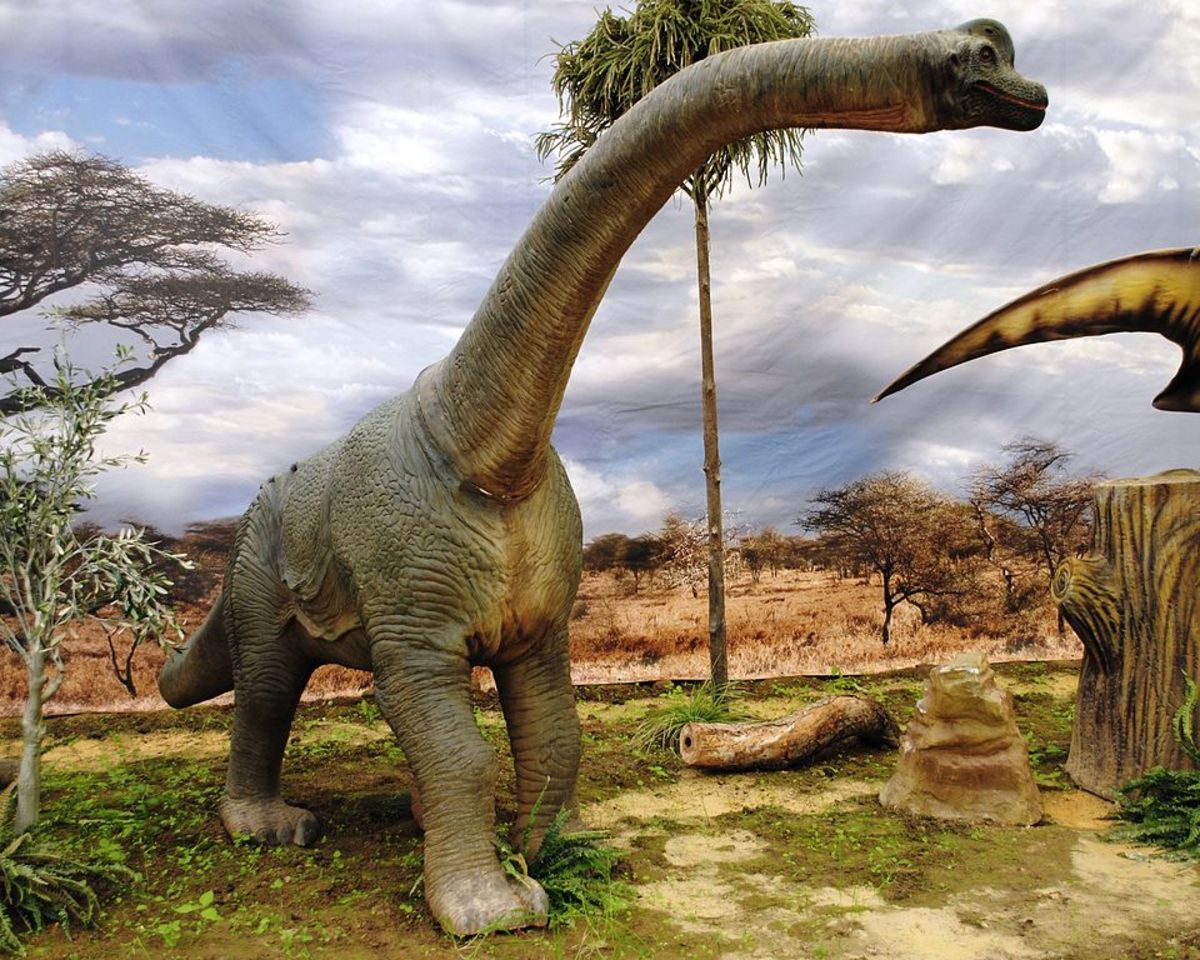 A Brachiosaurus, big, bald and proud!