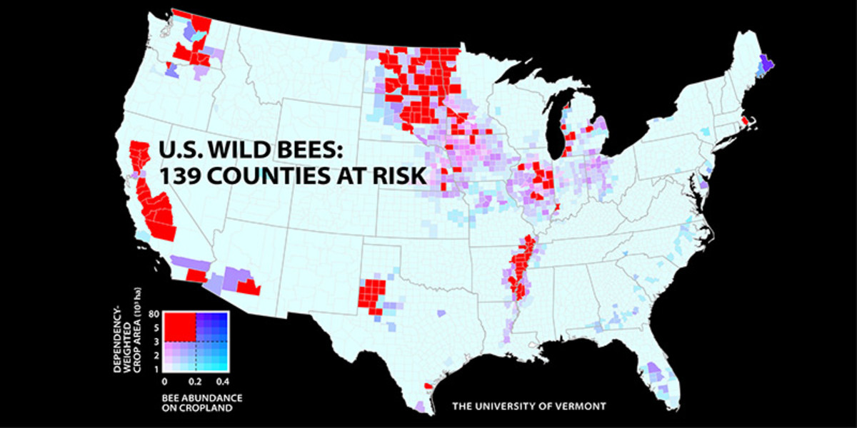 A new UVM study of wild bees identifies 139 counties in key agricultural regions of California, the Pacific Northwest, the Midwest, west Texas and the Mississippi River valley that face a worrisome mismatch between falling wild bee supply and rising