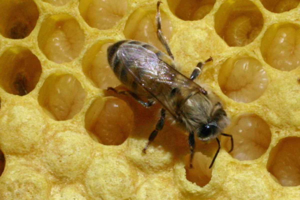 bees-pollination-and-habitat-loss