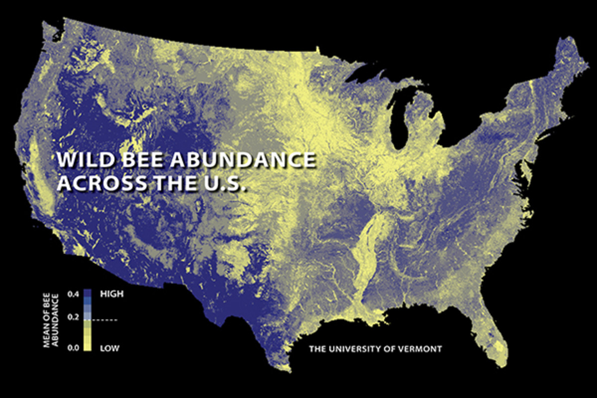 The first national study to map U.S. wild bees suggests they're disappearing in many of the country's most important farmlands. Relatively low abundances are shown here in yellow; higher abundances in blue.