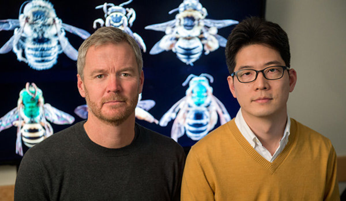 A research team led by Insu Koh (right) and Taylor Ricketts, bee experts at the University of Vermont's Gund Institute for Ecological Economics, estimates that wild bee abundance between 2008 and 2013 declined in 23 percent of the contiguous U.S., th