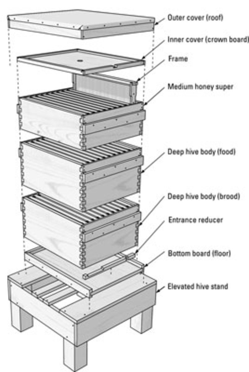 hive technical drawings