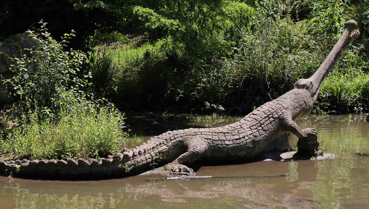 The teleosaurs. These early crocodilians are believed to have lived in salt water, not a fresh water lake, and may have swam in open water rather than in coastal environments, though their exact lifestyle is uncertain