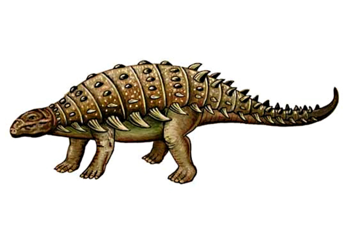 The heavily armoured Hylaeosaurus lived 150-135 million years ago in the early Cretaceous Period