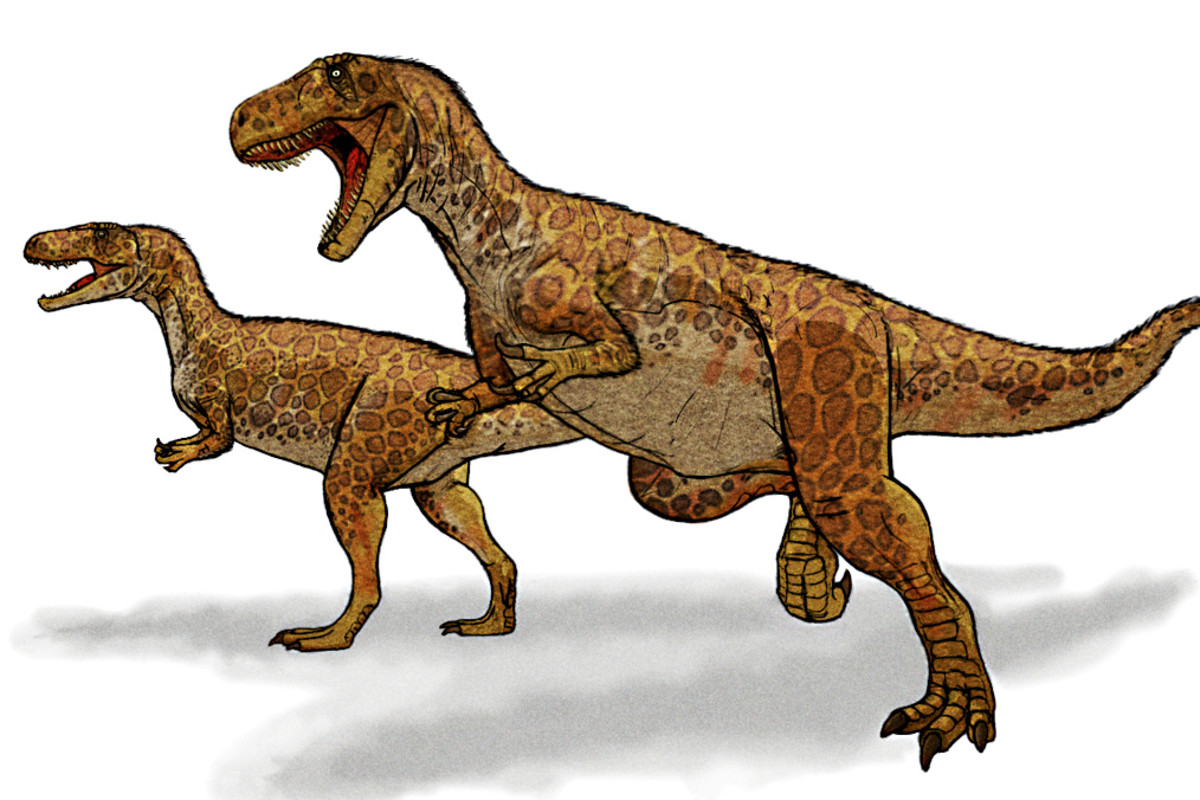 This agile bipedal Megalosaurus depiction is thought to be much closer to the truth of this fearsome dinosaur