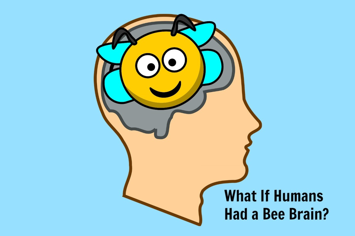 How smart would big-brained humans be if we had  bee brain capabilities?