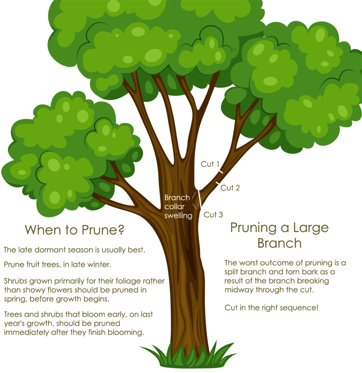 Pruning advice graphic.