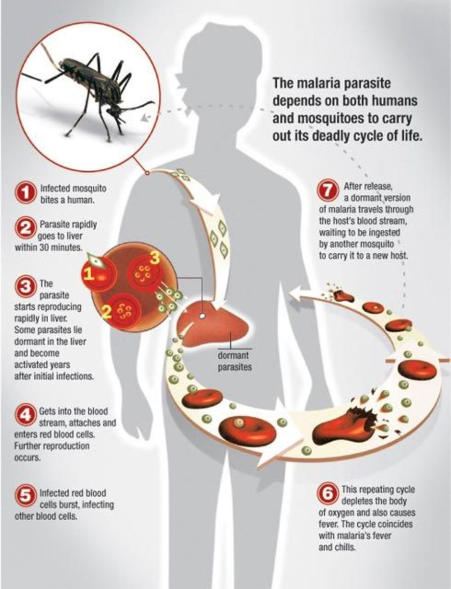 Malaria is a deadly disease transmitted among humans by only about 30-40 species of female mosquitoes of the genus Anopheles.  There are approximately 430 species in that genus.