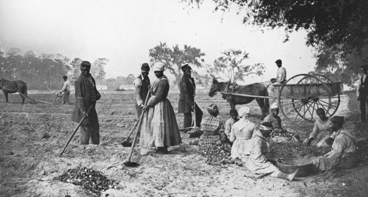 Slaves at work on a plantation circa 1863