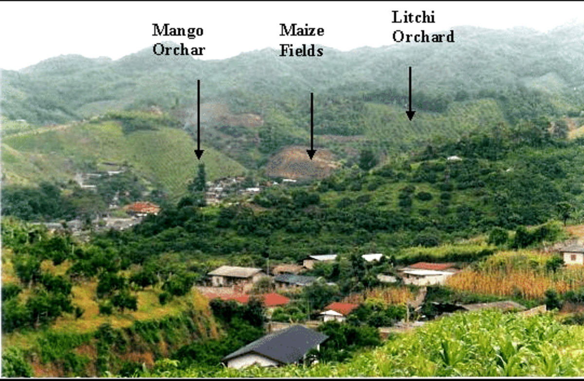 What I believe is a picture of Lin Village, but I might be wrong. Regardless, a Chinese (or Taiwanese) village.