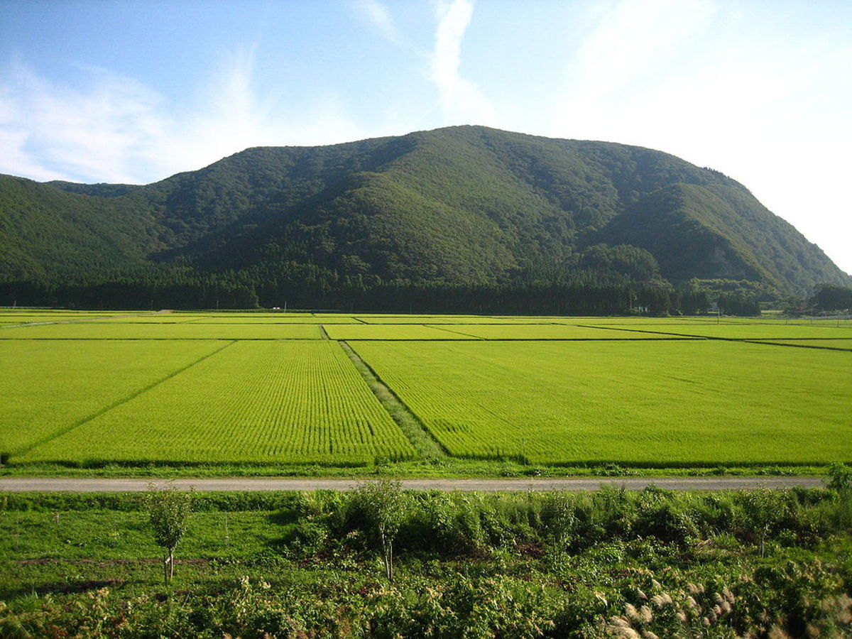 Still a major user of land and heavily subsidized and protected by the government, rice has declined in material importance in Japan since its immediate post-war peak.