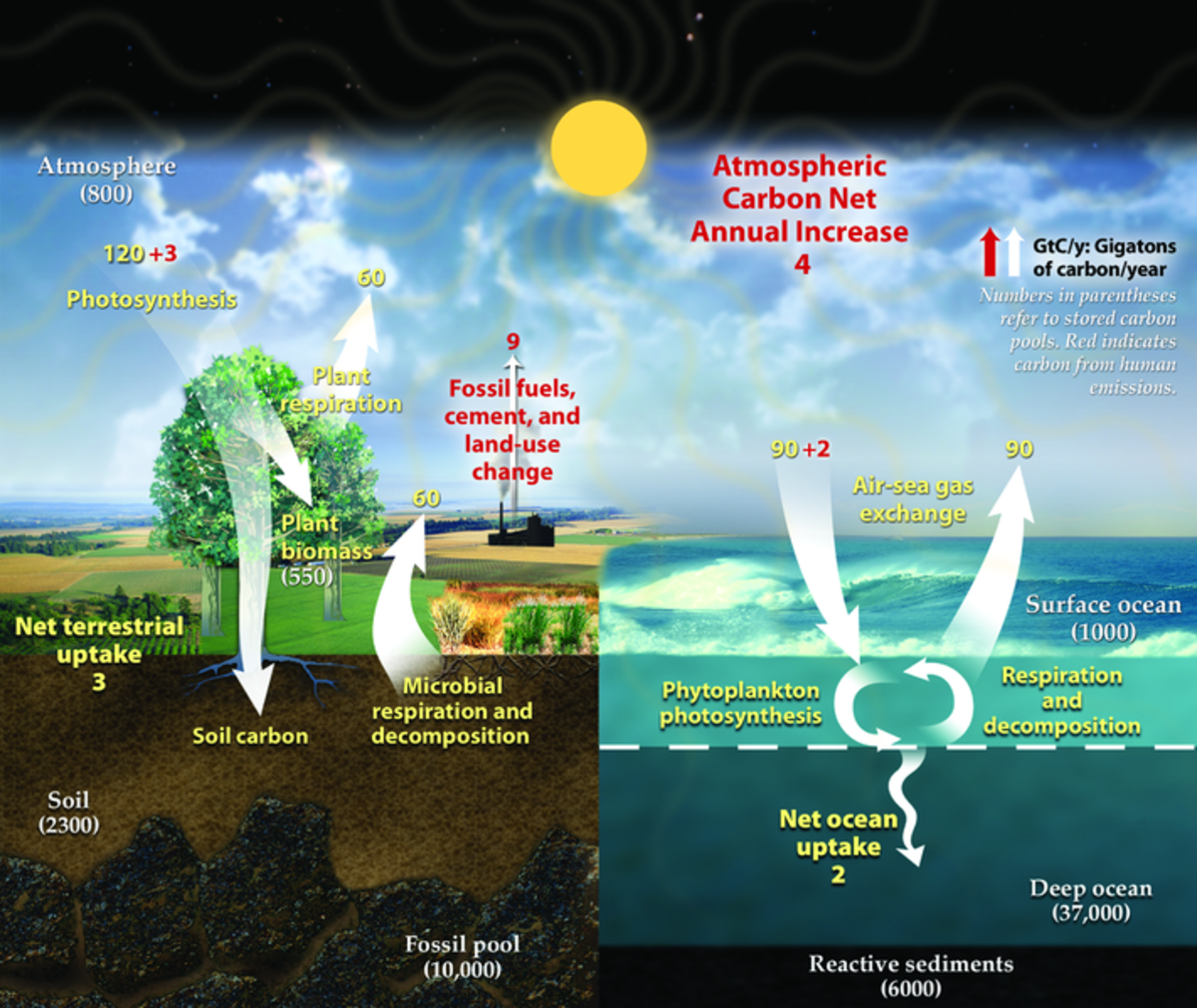 Carbon Cycle-Phytoplankton