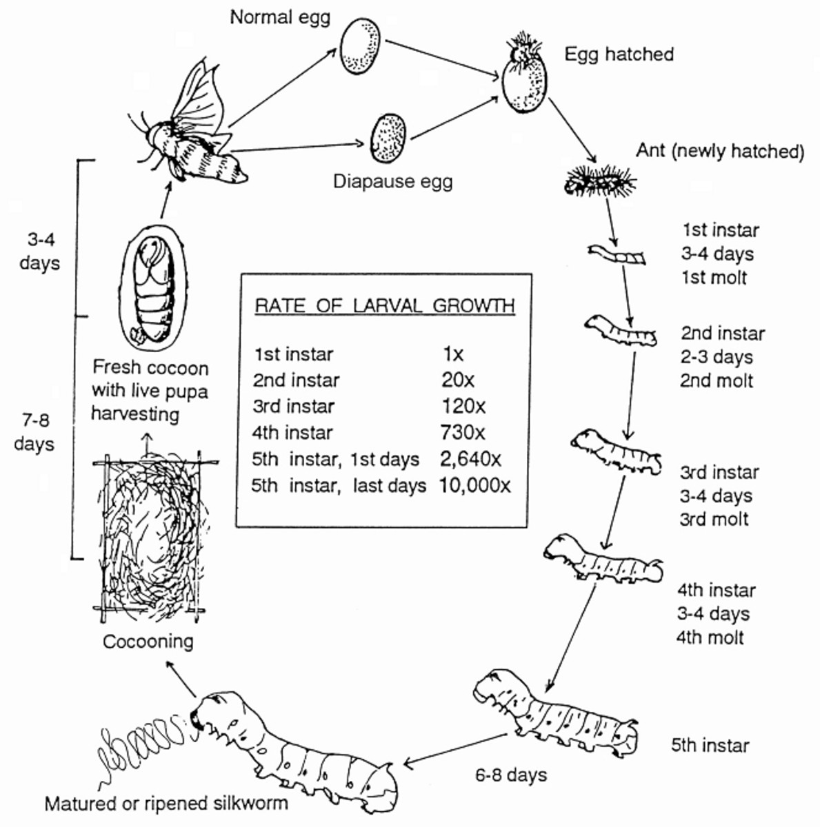silk-silkworm-life-cycle-and-how-to-care-for-silk-fabrics