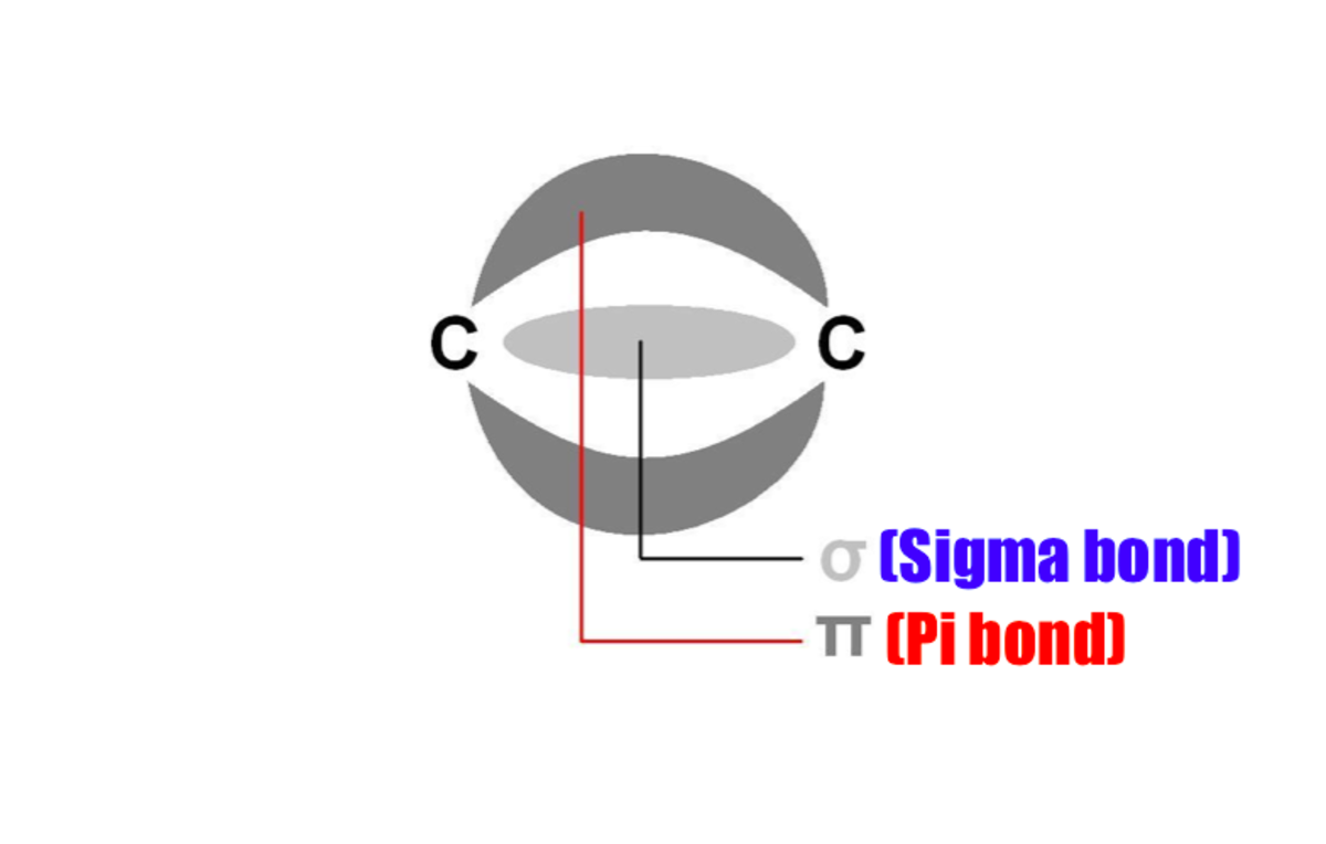 A carbon-carbon covalent double bonds consists of a sigma and pi bond. The pi bond is weaker in energy than the sigma bond and therefore can break more easily.
