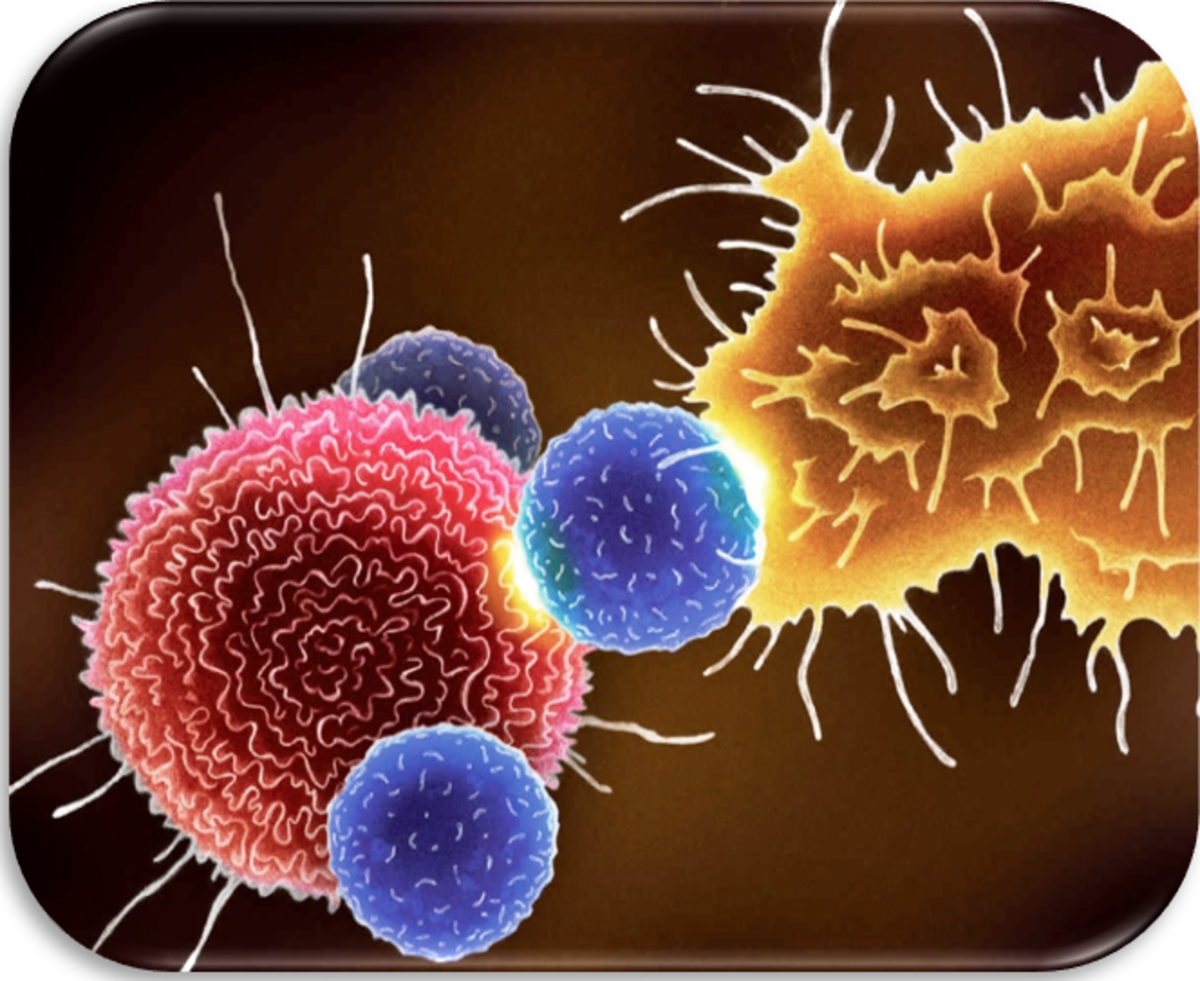 Cancer immunotherapy is a rapidly advancing field. Activated antitumor T cells target new antigens that are generated by cancer cell mutations, leading to targeted killing of cancer cells.
