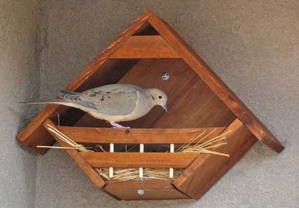 This nesting box looks easy enough to build and provides room enough for a family of mourning doves.  Put some straw in there for them as they are not great at building nests.