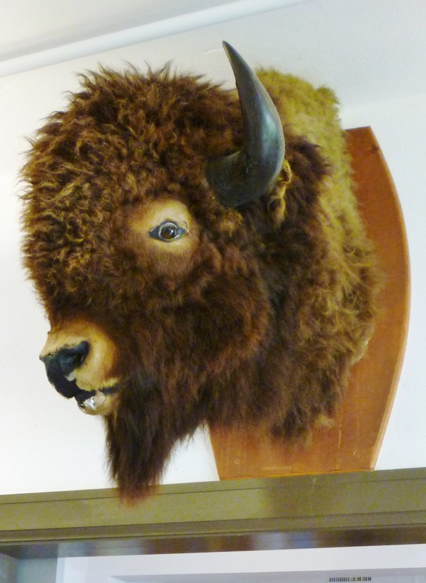 Buffalo head in the Buffalo Soldiers National Museum
