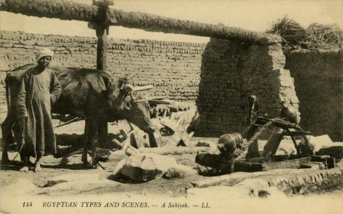 In a pre-industrial economy, animal labor was a vital element of energy.