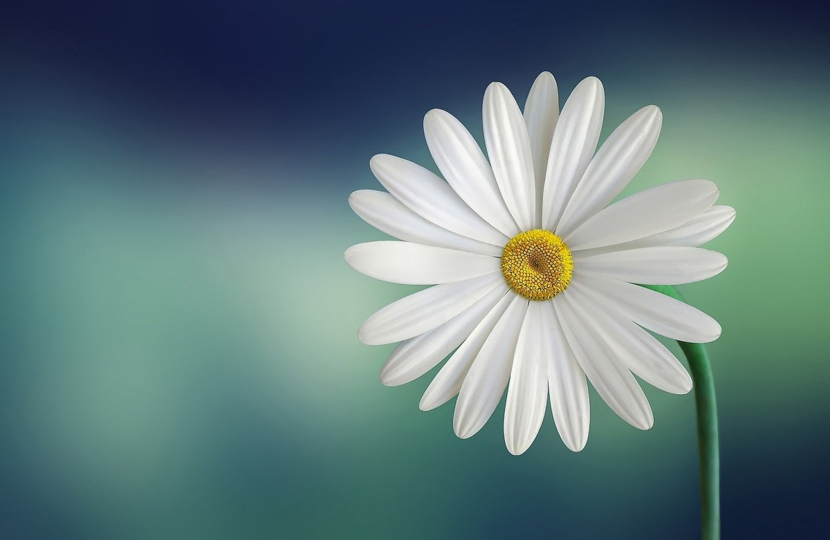 15-flowers-name-in-hindi-with-english-translations