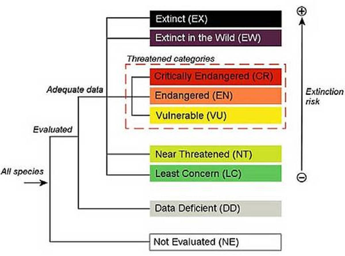 categories of extinction as set forth by the IUCN - Red List Methodology Chart