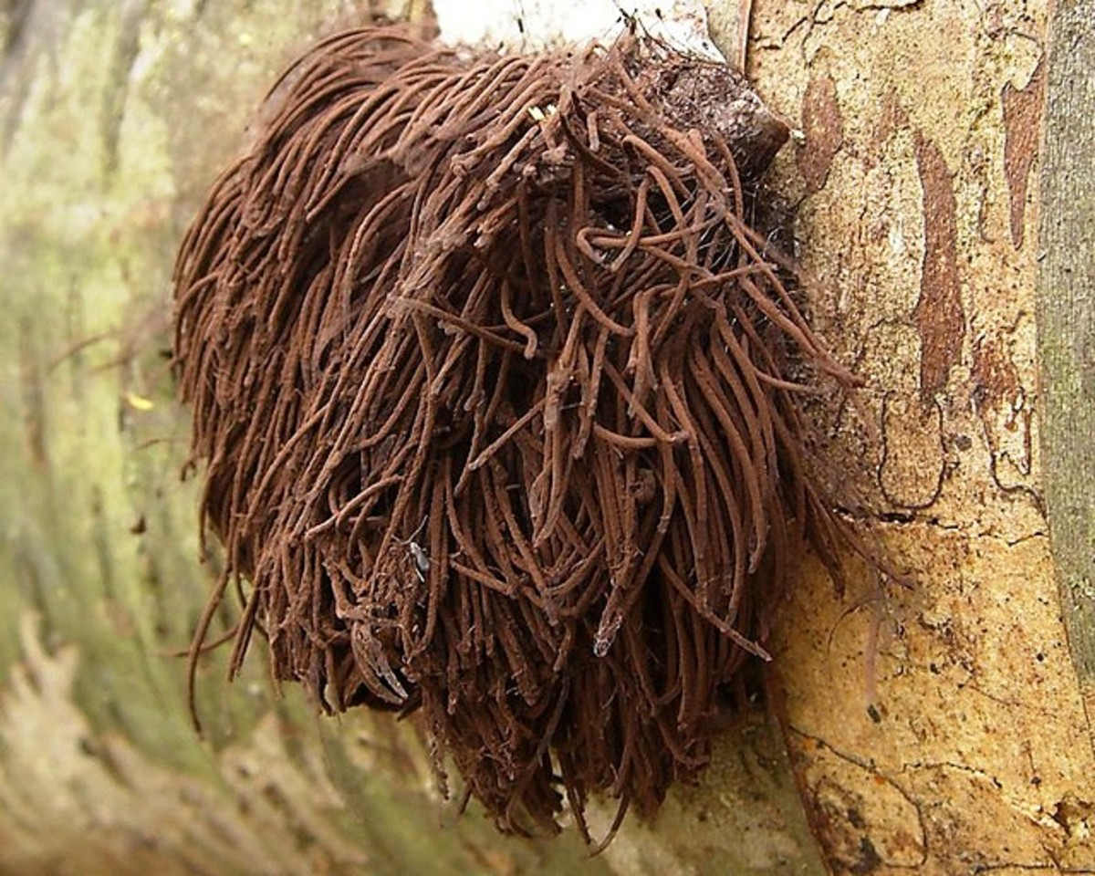 This chocolate tube slime looks like someone left their wig behind in the forest.  Creepy!