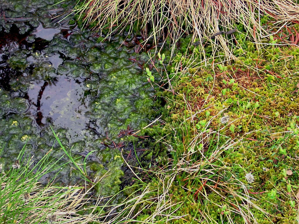 A close-up detail of a bog containing sphagnum moss