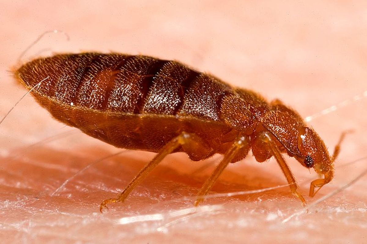 Bed bugs are real and prefer dirty environments with lots of places to hide in.