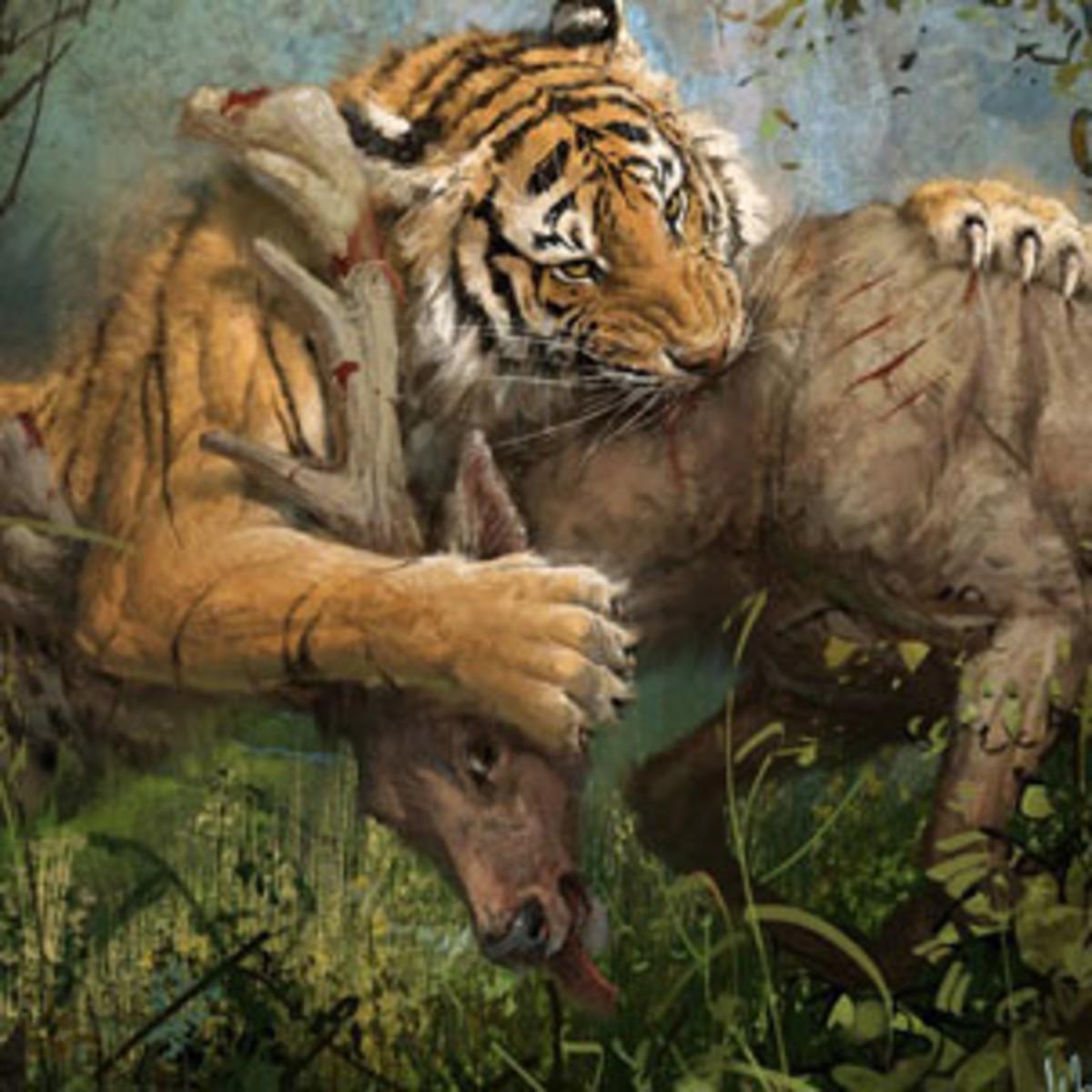 Artwork of a Siberian Tiger killing it's prey.