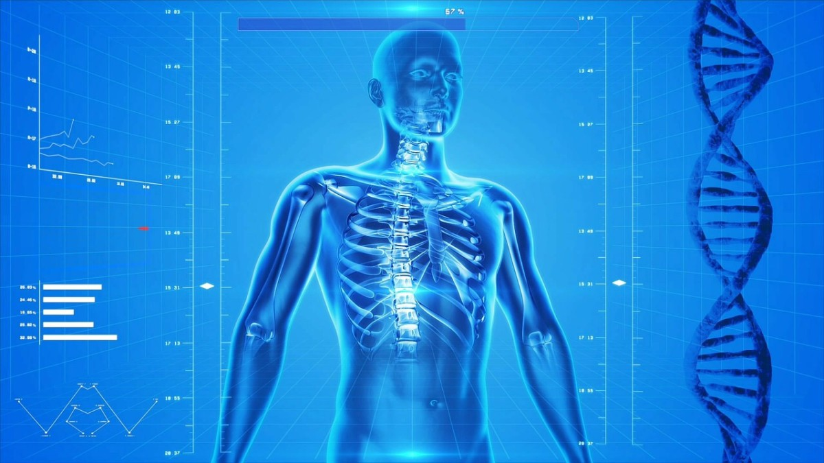 The skeleton is a vital part of the human body.