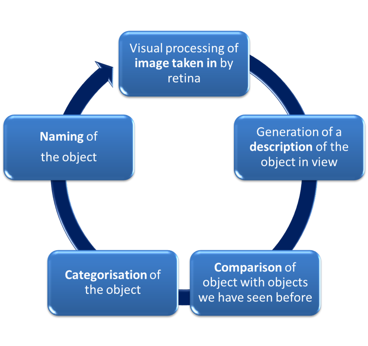 Humphreys and Bruce (1989) Object Recognition Model