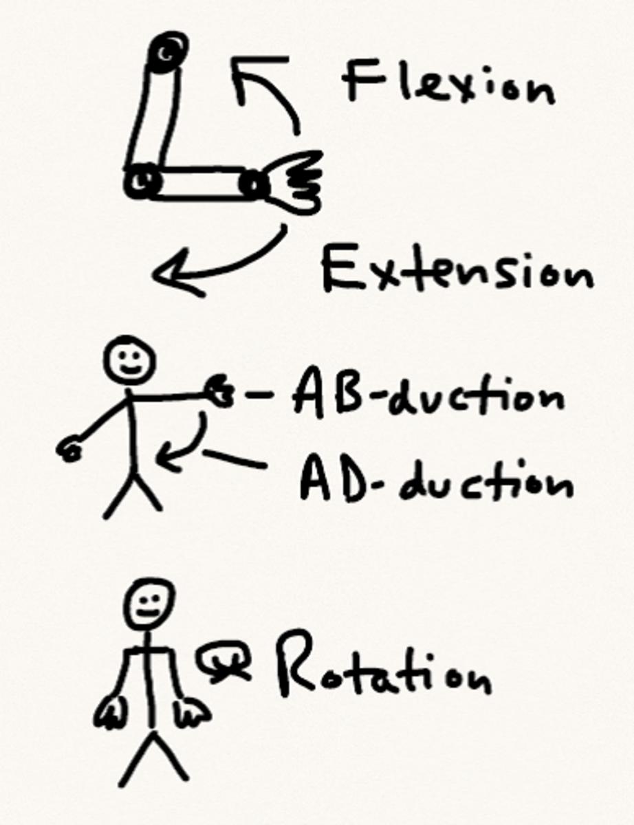 Anatomical movements schematic