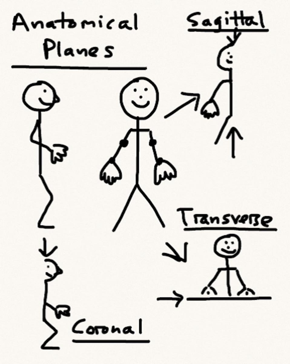 Anatomical planes schematic