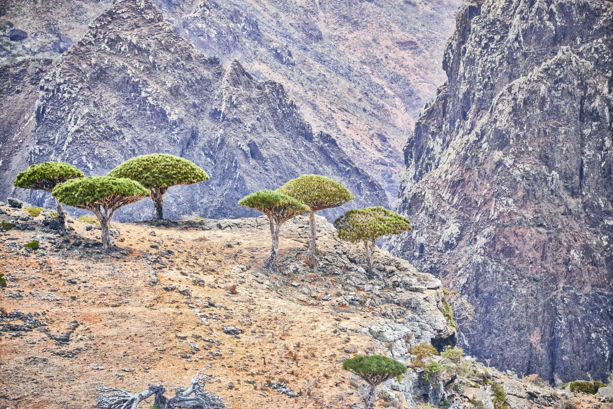 Trees growing on a mountain plateau