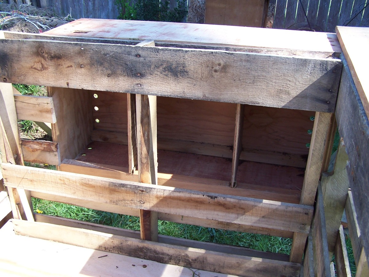 Nesting boxes inside the coop