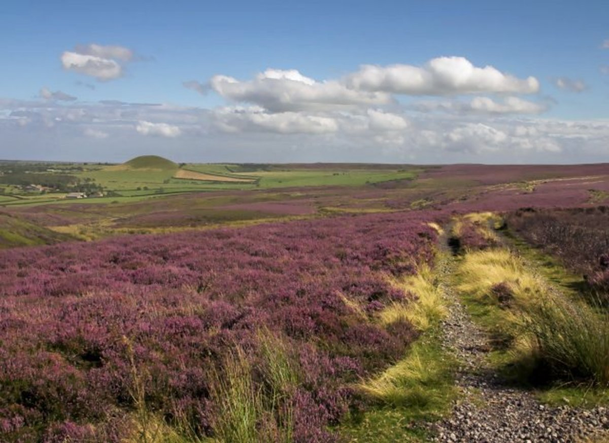 Heather moorland on the North York Moors