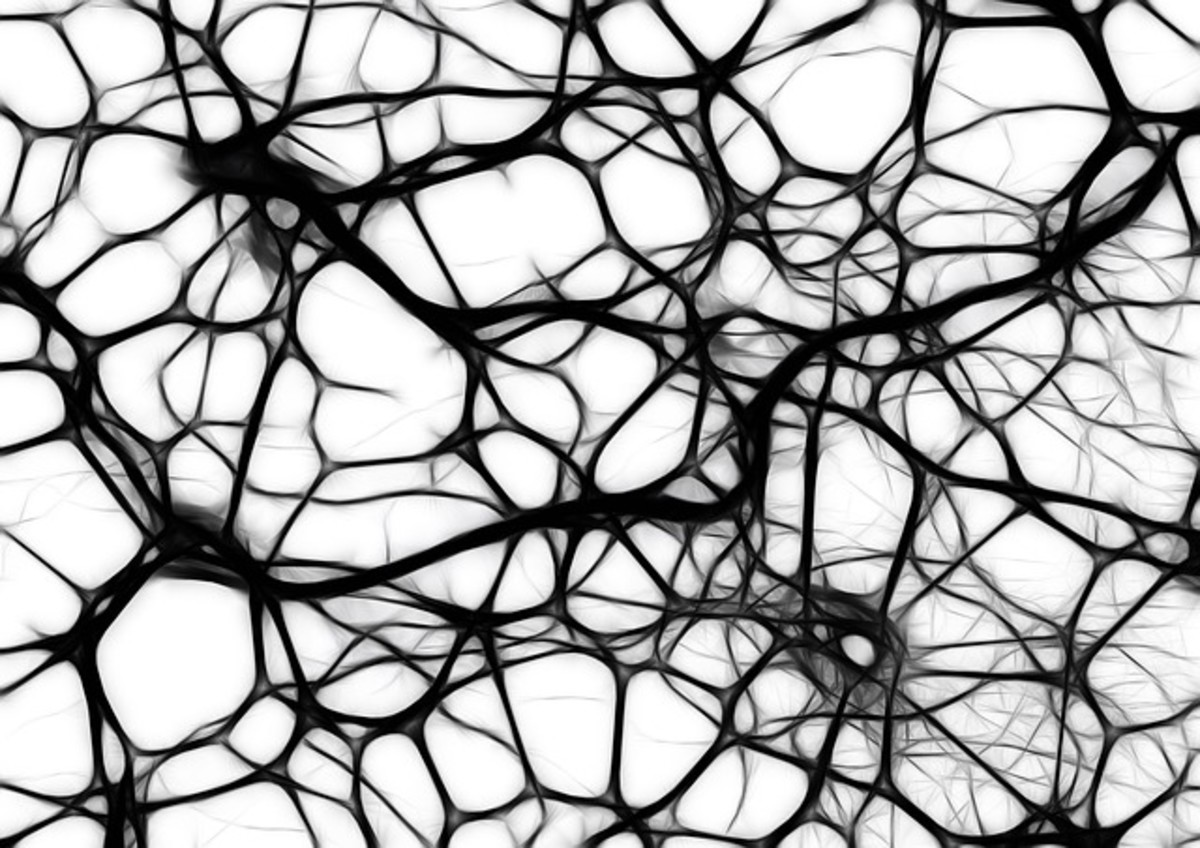Our neural networks are a web of nerve fibres sending signals around our body