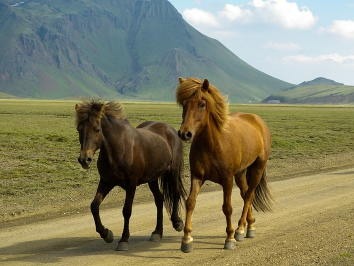 Horses have had a close relationship with humans ever since they were domesticated in 4000 BC.  They have been bred to possess both speed and endurance and have an average gallop speed of 25 to 30 mph, although the world record is 55 mph.